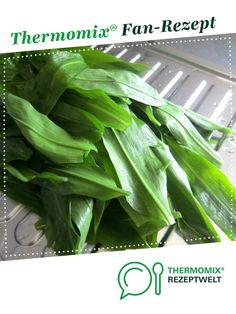 Bärlauchsuppe von Schnatzel1. Ein Thermomix ® Rezept aus der Kategorie Suppen auf www.rezeptwelt.de, der Thermomix ® Community.