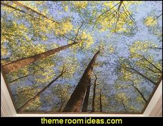 looking+up+in+forest+Mural.jpg (404×312)