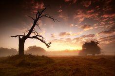 Pohansko by Radek Severa Celestial, Sunset, Places, Nature, Outdoor, Beautiful, Scenery, Outdoors, Naturaleza