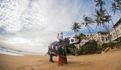 Destination Wedding Camel, Destination Wedding, Animals, Animales, Animaux, Camels, Animal, Bactrian Camel, Animais