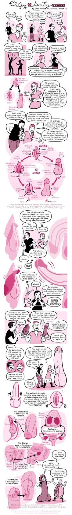 Curious about human genitalia? Even if the answer is no - this comic is pretty fascinating.