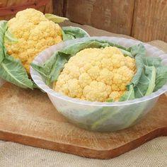Cauliflower Cheddar F1