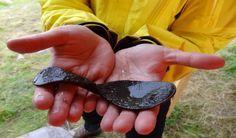 Viking age wooden spoon. Birka, Sweden.