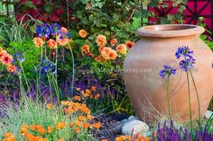 Dahlias, Hydrangea, Carex ornamental grass, Arctotis flowers, Salvia, Agapanthus for an orange and blue purple themed garden, gareden container pot urn ornament, climbing vines on trellis.