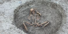 """Workers preparing to place new water pipes have found an ancient burial site with """"human sacrifice"""" bones in the U. The site, which was located in Childrey Warren, Oxfordshire, contained about 26 human skeletons … Roman Era, Human Skeleton, Animal Bones, The Secret History, White Horses, Iron Age, Prehistoric, Lion Sculpture, Skeletons"""
