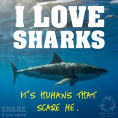 Scare is the wrong word but... I do love sharks ..of all kinds :)