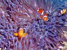Nemo!!! <3