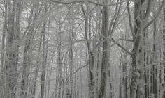 bukowy las, Ropki, Swystowy Sad