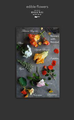 jedlé kvety-nová