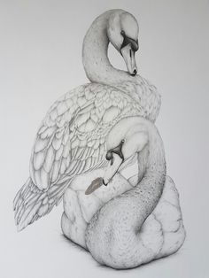 """""""Forever"""" from the Fauna and Folklore collection by Kerry Jane. Swans pencil drawing."""