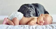 Dogs are family :)