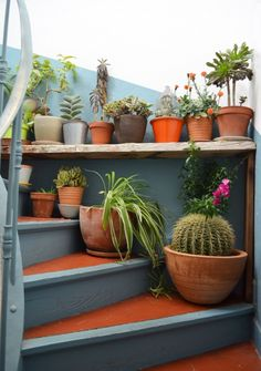 Staircase garden with potted cactus and succulents