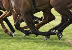 Horse Hooves Galloping Horse hooves galloping