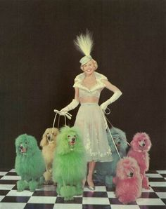 Doris Day and Poodles