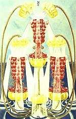 3 of Cups-Abundance-warm and joyous card of shared emotion and commitment. Refers to fertility. Love between lovers, friends or family. May be celebration - weddings, love. Warning- this love cannot be created, engineered. When it occurs we are lucky and blessed. Very fortunate type of love.