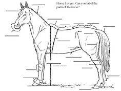 Can you label the parts of a horse? Basic horse anatomy check-up. Test your knowledge!
