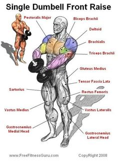 Dumbell Front Raise Anatomy keep motivation for fitness Gym Workout Tips, Dumbbell Workout, At Home Workouts, Dumbbell Squat, Workout Fitness, Kettlebell, Muscle Fitness, Mens Fitness, Health Fitness