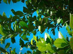 Lime Lime, Fruit, Nature, Limes, Naturaleza, Nature Illustration, Off Grid, Key Lime, Natural