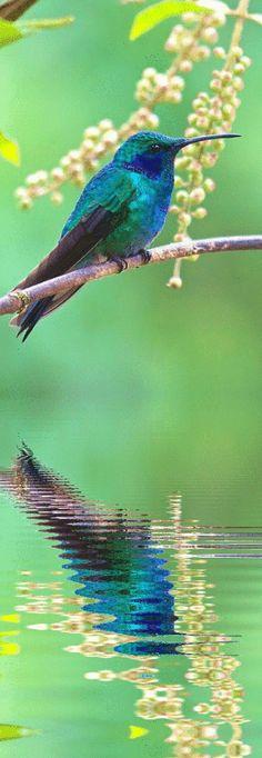 hummingbird. http://RetireFast.info