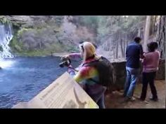 Burney Falls (34 min), Episode 1 Part 2, California Travel Videos  We tour the 1.3 mile path, complete with commentary, music. Enjoy the waterfalls up close and personal, learn photography and what makes Burney Falls so special, see all the sights along the loop, watch fly fishing and enjoy laughs with us on a glorious day enjoying the fall colors.