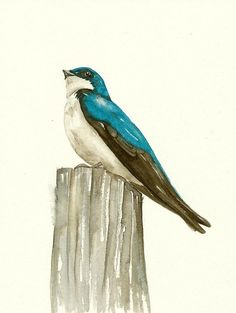 SWALLOW Bird - Watercolor Art Print, Limited Ediction - Painting by Lorisworld