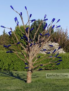 "The ""blue bottle tree"" near the rose garden at the Arboretum State Botanical Garden in Kentucky"