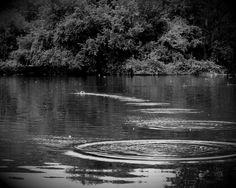 La route invisible de la pesanteur délivre la pierre. Les pentes invisibles de l'amour délivrent l'homme. Pilote de guerre (1942) Antoine de Saint-Exupéry