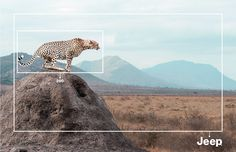 「動物園」で見る動物と「Jeep」で見る動物 | AdGang