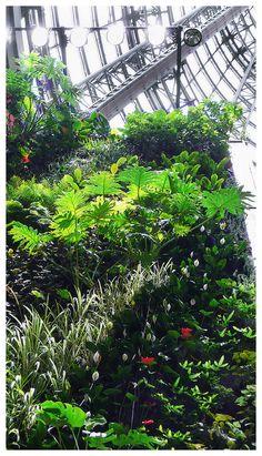 垂直花园~