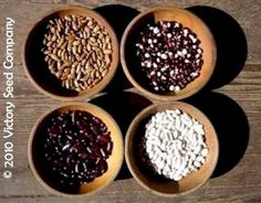 Welcome to Victory Seeds - Rare, Open-pollinated & Heirloom Garden Seeds