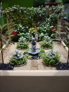 Miniature Garden | An entry in the miniature garden class at… | Flickr