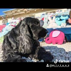 Mirtusz Melinda (@mirtusz_szivderito_alkotasok) • Instagram-fényképek és -videók Dogs, Animals, Instagram, Animaux, Doggies, Animales, Animal, Pet Dogs, Dieren