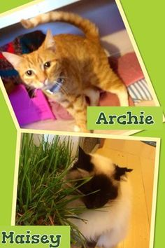 Archie & Masiey Cattery, Melbourne, Cats, Boarding Kennels