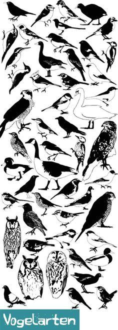 Digitale Illustration, verschiedene Vogelarten
