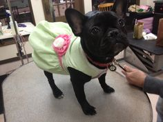 Penny Lane is ready for Easter!  by Chelsea