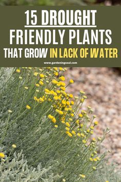 These are the best drought-tolerant plants that can live without water for an extended period of time. Colorful Plants, All Plants, Tropical Plants, Full Sun Planters, Growing Poppies, Soil Texture, Drought Tolerant Plants, Agaves, Small Trees