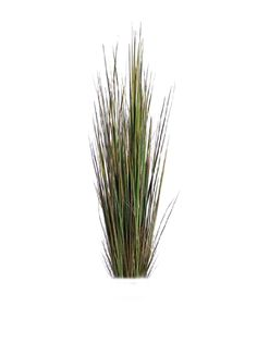 cutout plant grass