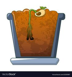 Bean in ground germinated icon cartoon style Vector Image Social Skills Lessons, Life Skills, Vector Icons, Vector Free, Plant Science, Preschool Education, School Decorations, Life Cycles, Cartoon Styles