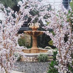 Cherry Blossom, Fountain, Wedding Decorations, Romantic, Garden, Outdoor Decor, Instagram Posts, Garten, Romantic Things