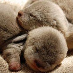 Little otters!! - (Source:...