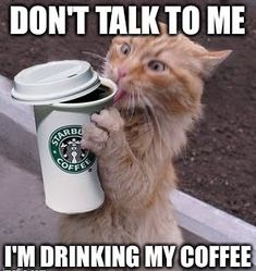 Go ahead, console yourself with coffee. You're not heartbroken. It's awesome you get to have another Starbucks americano instead of creating new life this month. Infertility Explained By 33 Impossibly Adorable Cats I Love Coffee, Coffee Break, My Coffee, Morning Coffee, Coffee Shop, Coffee Cups, Coffee Talk, Coffee Lovers, Funny Coffee