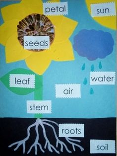 Sunflower Parts & Needs Guide & Template - ONLY $1!