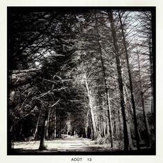 Forêt#tree