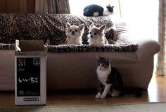 犬より上手な猫 - Cat playing fetch better than dogs -