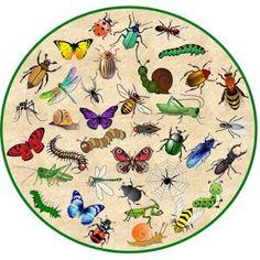 zoekplaat kriebelbeestjes