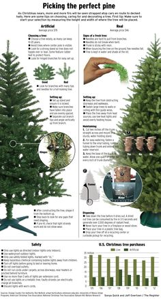 Fake or real? What to look for in a Christmas tree