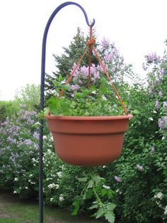 try cherry or grape tomatoes growing upside down and basil, rosemary, &/or oregano growing on top