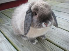 Bunny is round and fluffy - May 9, 2012