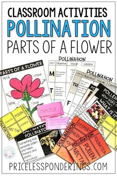 Teaching your students about parts of a flower? These activities are perfect for your science class and pollination activities. #scienceclass #3rdgrade
