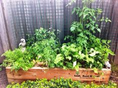 We provide custom made, raised veggie gardens using cypress sleepers. Rot & termite resistant without treatment, they are the safest option for veggie gardens. Sleepers In Garden, Raised Garden Beds, Raised Beds, Fruit Garden, Edible Garden, Veggie Gardens, Wicking Beds, Growing Sweet Potatoes, Growing Raspberries